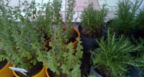 Νέα Προϊόντα: Αρωματικά Φυτά